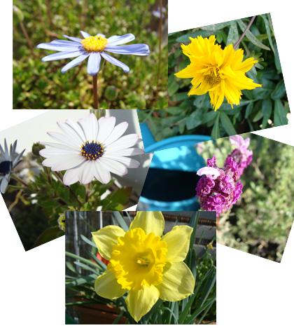 Frühling auf unserer Terrasse