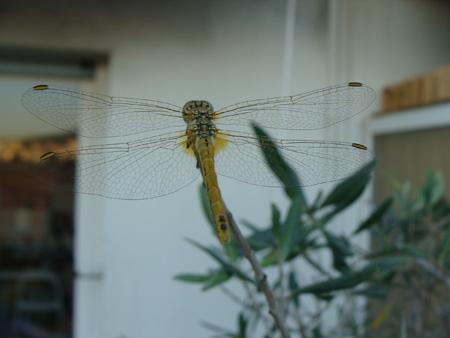 libellule-terrasse-33