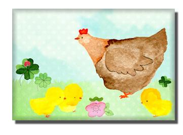 poules-poussins-Madame-Rhub