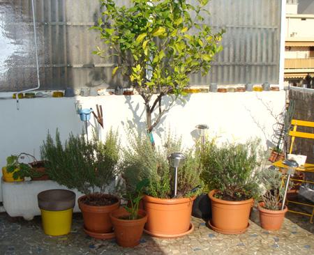 Nice plantes en pots vendre merci de partager libellulobar fabricant de magnets libellulobar for Plantes pour terrasses